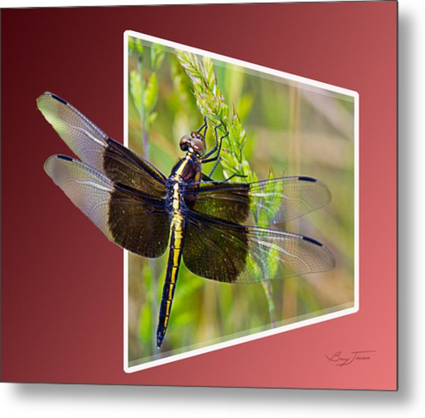 Dragonfly Holding On Metal Print by Barry Jones