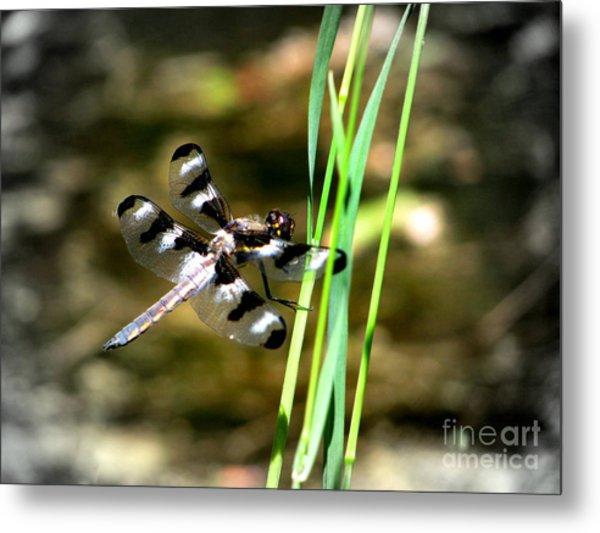 Dragonfly Metal Print by Irina Hays