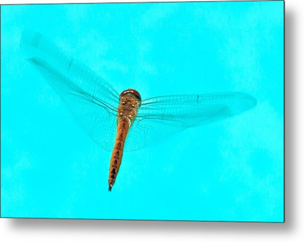 Dragonfly Metal Print by Miguel Capelo