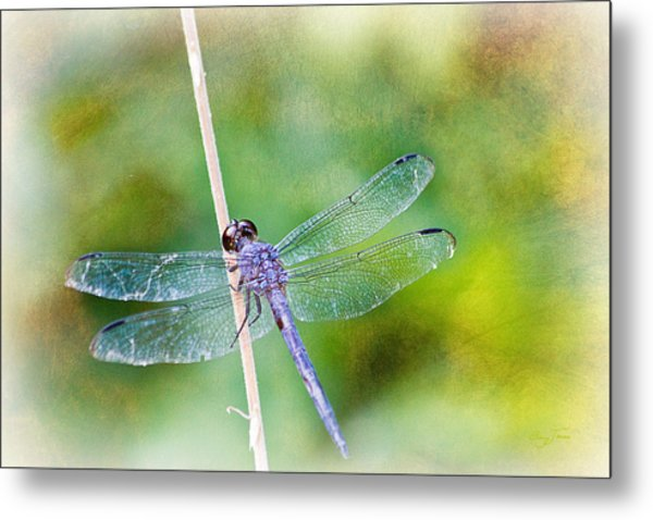 Dragonfly Respite 001 Metal Print by Barry Jones