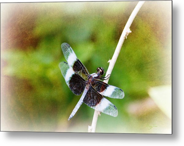 Dragonfly Respite 002 Metal Print by Barry Jones