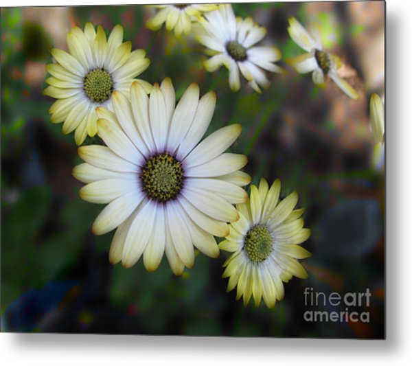 Dream Daisy Metal Print