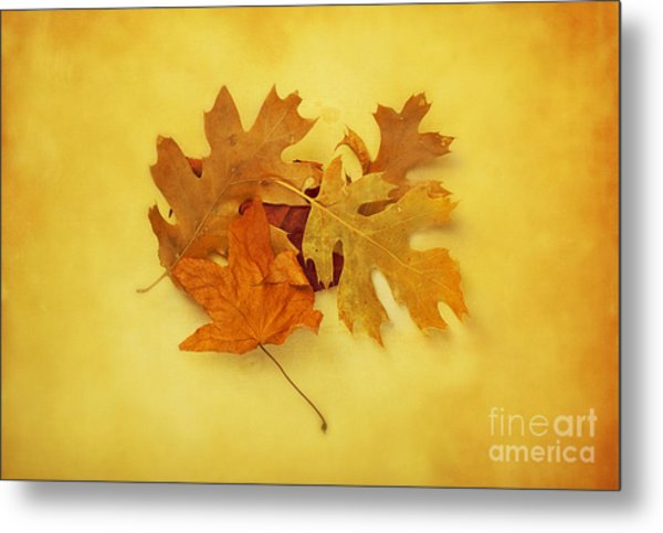 Dried Autumn Leaves Metal Print