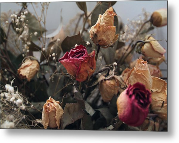 Dried Roses Metal Print