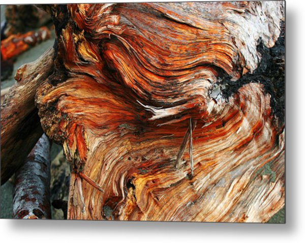 Drift Redwood Metal Print