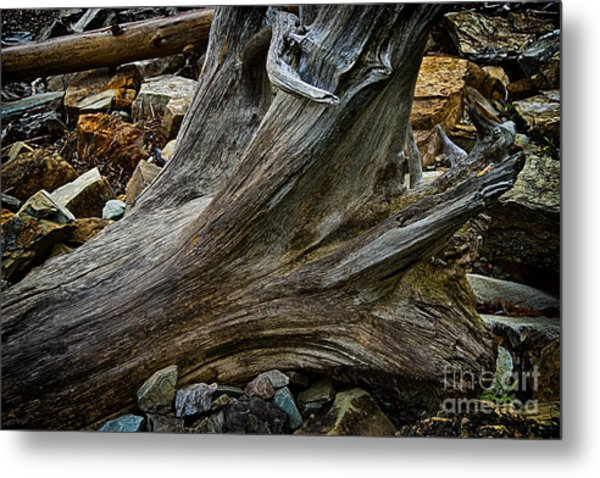 Drift Wood One Metal Print by Rick Bragan