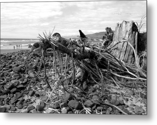 Driftwood And Rocks Metal Print