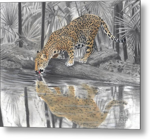 Drinking Jaguar Metal Print