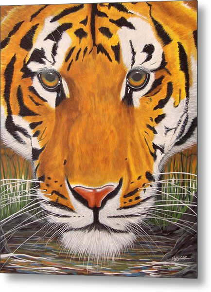 Drinking Tiger Metal Print by Jeffrey Oldham