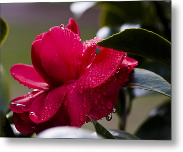 Dripping Color Metal Print by Jim Neumann