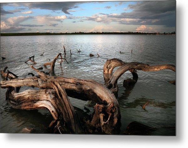 Dry Log In A Lake Metal Print
