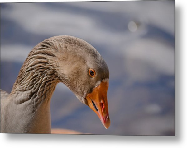 Duck's Portrait Metal Print by Joab Souza