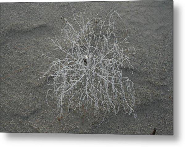 Dune Flower Metal Print
