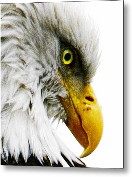 Eagle Eye Metal Print by Carrie OBrien Sibley