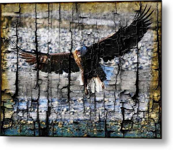 Eagle Imprint Metal Print by Carrie OBrien Sibley