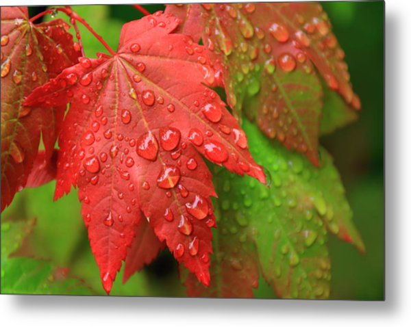 Early Autumn Metal Print by Lee Amerson