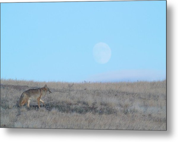 Early Hunt Metal Print
