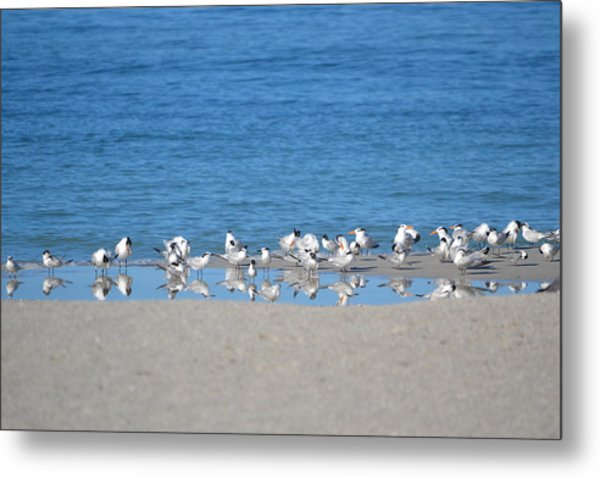Early Morning Networking Metal Print by Brenda Alcorn