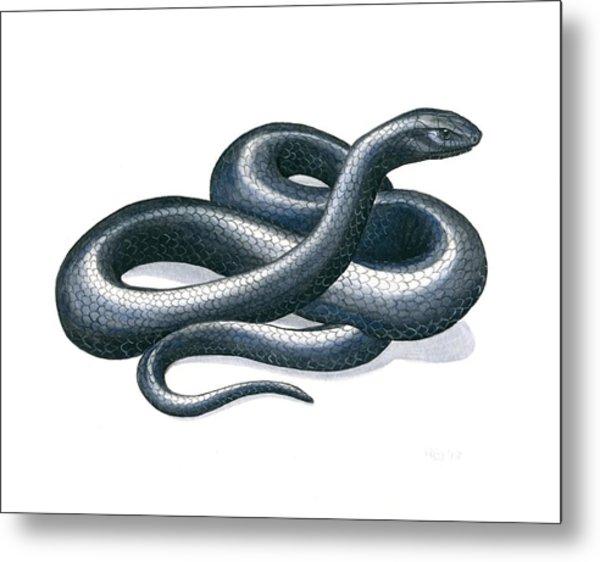 Eastern Indigo Snake Metal Print by Anna Bronwyn Foley