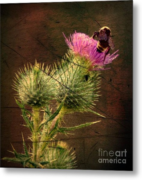 Easy Stepping Metal Print by David Taylor