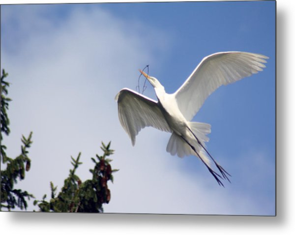 Egret Carrying Stick Metal Print