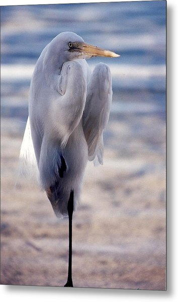 Egret Key West Metal Print