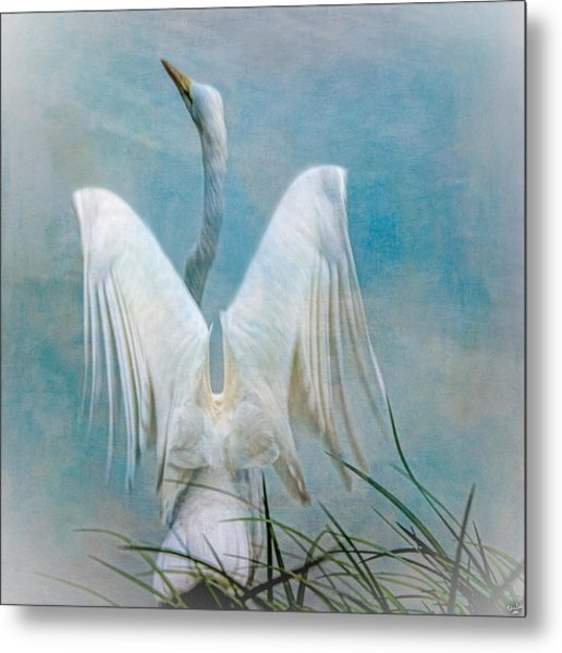 Egret Preparing To Launch Metal Print