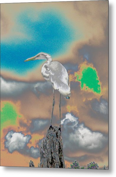 Egrit Metal Print by Perry Conley