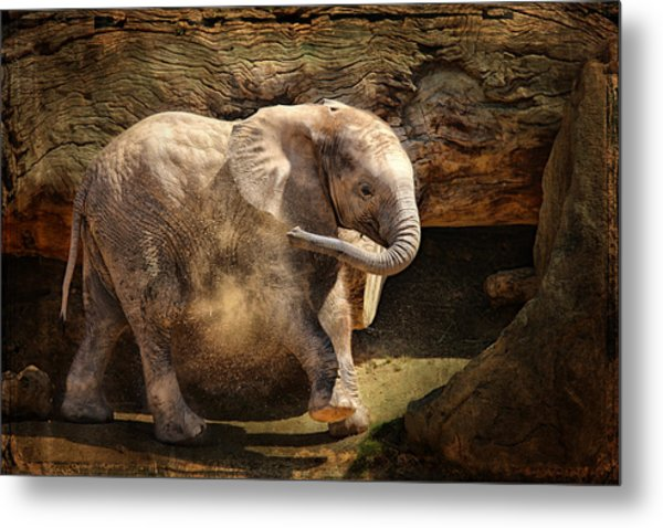 Elephant Calf Metal Print
