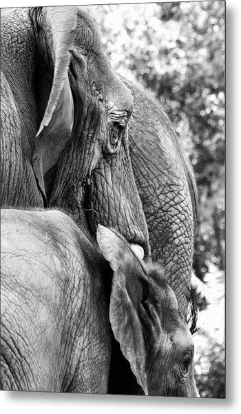 Elephant Ears Metal Print