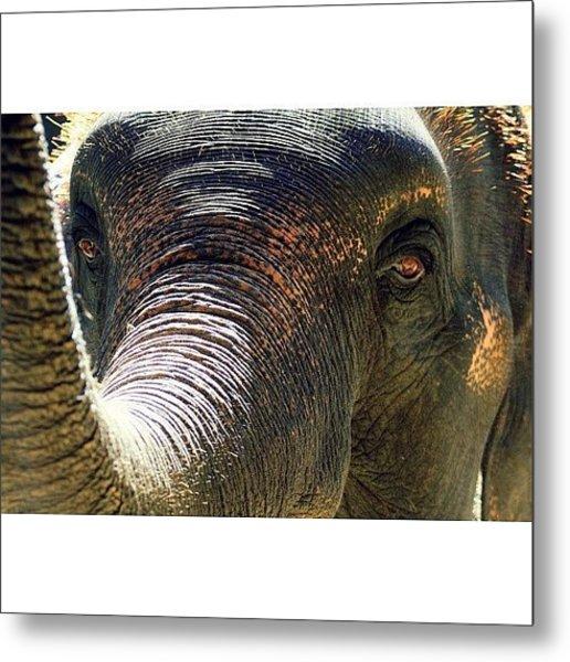 Elephant Eye..#travel #thailand Metal Print