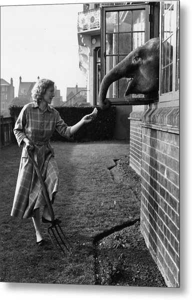 Elephant In The House Metal Print by John Drysdale