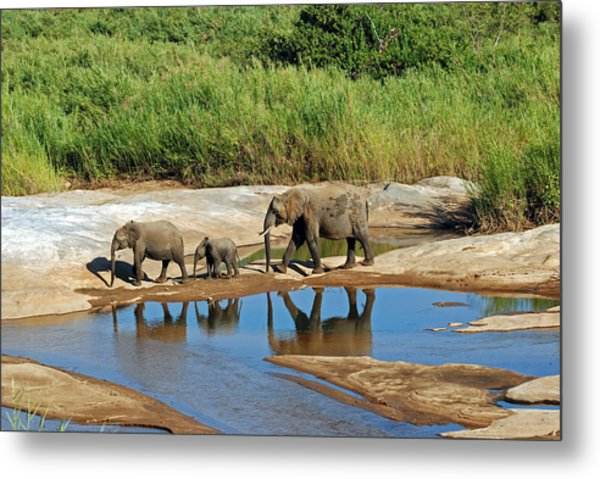 Elephant Reflections And The Sand River Metal Print