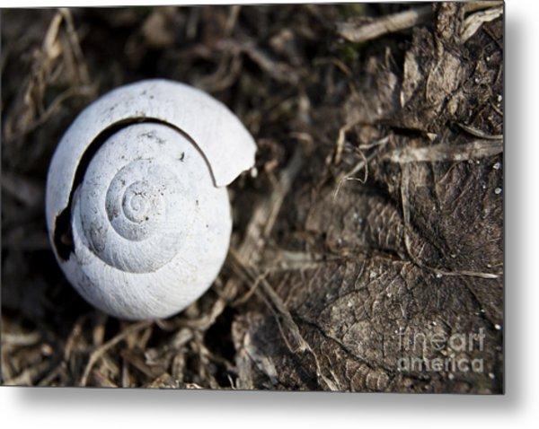 Empty Shell Metal Print by Agnieszka Kubica