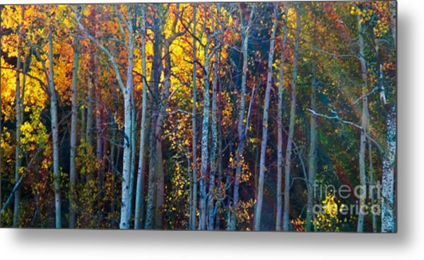 Enchanted Aspen Metal Print