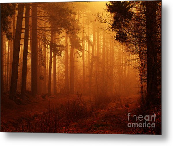 Enchanted Forest Metal Print by Clare Scott