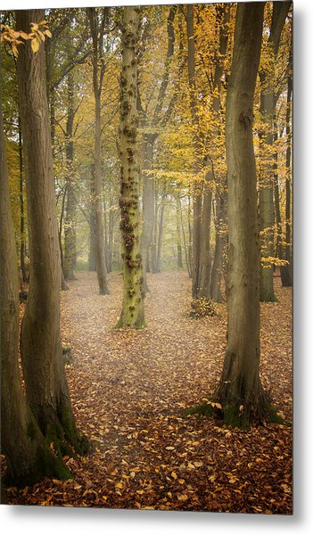 English Forest In Autumn Metal Print