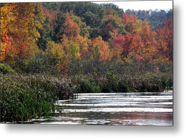 Even Swamps Have Beauty Metal Print by Kim Galluzzo Wozniak