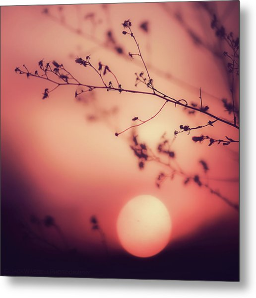 Evening Delight Metal Print by Jack Wassell Photography