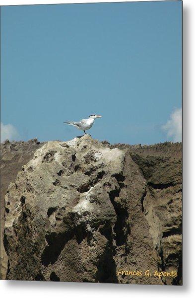 Exoctic Birds Metal Print by Frances G Aponte