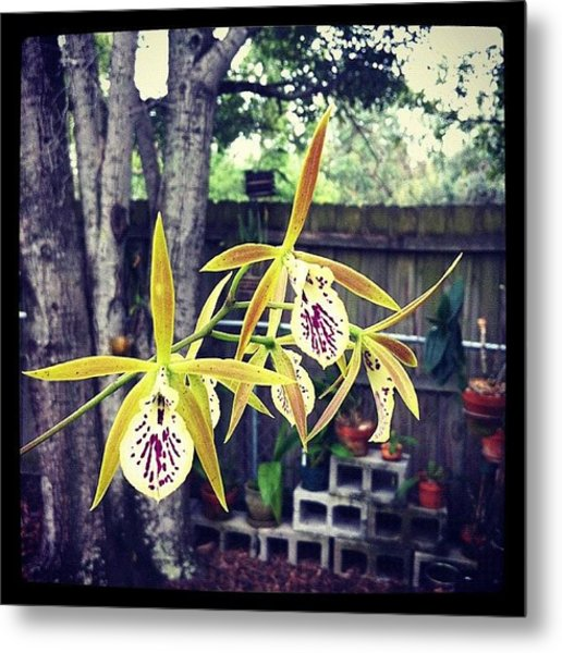 #exotic #orchid #exoticorchid Metal Print