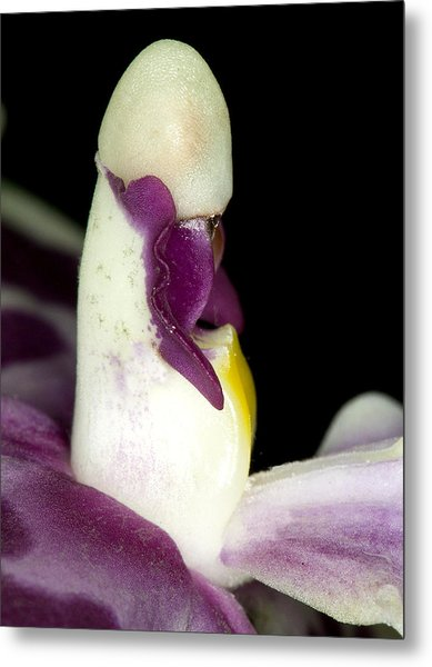 Exotic Orchid Flower Metal Print