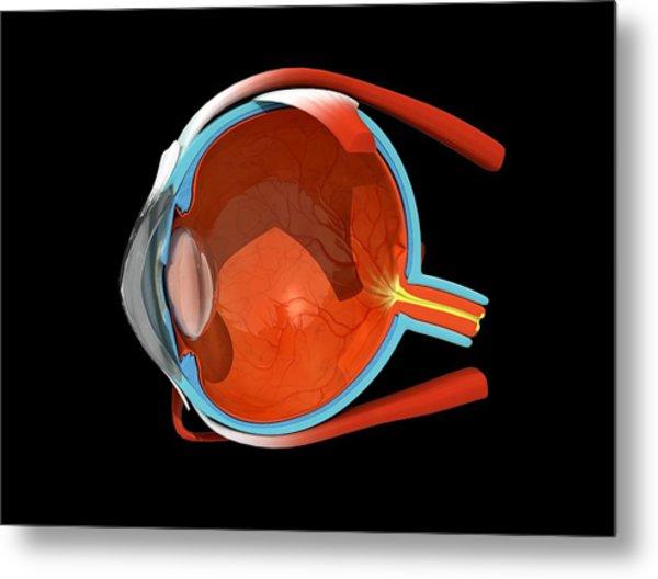 Eye Anatomy Metal Print by Jose Antonio PeÑas