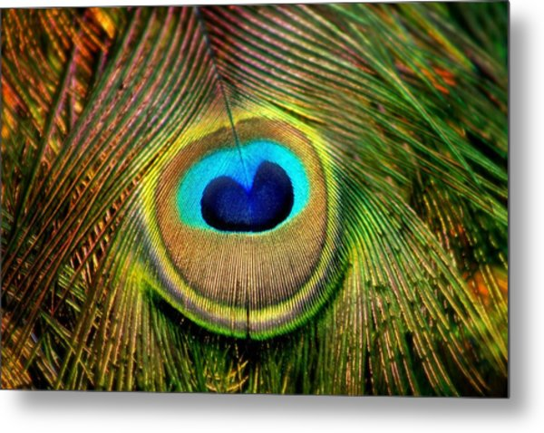 Eye Of The Peacock Feather Metal Print
