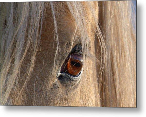 Eyes Of Beauty.. Metal Print by Al  Swasey