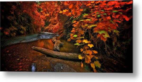Fall Along The Creek Metal Print