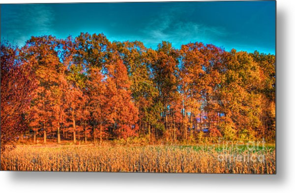 Fall Beauty  Metal Print