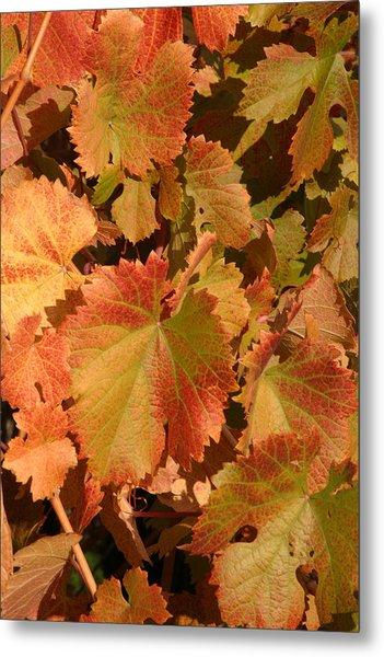Fall Colors Metal Print by Diane Bohna