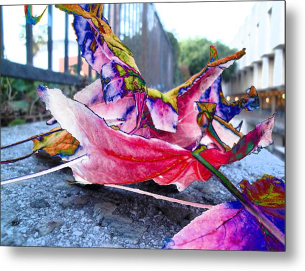 fall composition in spring  at CSULA Metal Print