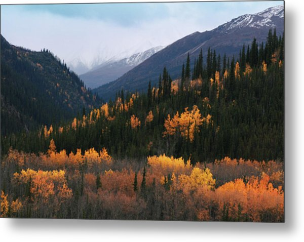 Fall Denali National Park Metal Print